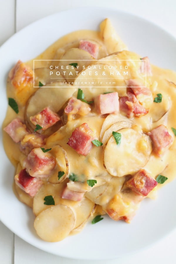 Cheesy Scalloped Potatoes with Ham #ham #recipe #dinner